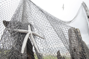 Sea Star on a Fishing Net