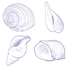 Set of seashells. Hand drawn vector illustrations