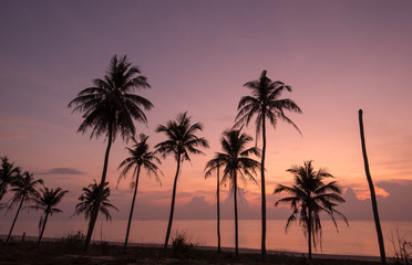 silhouette of coconut trees with beautiful sky  in the morning