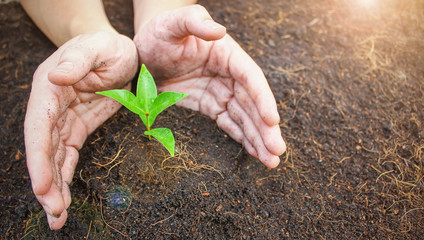 Two hands holding a young green plant, closeup hands environment heal earth day and save the world concept background