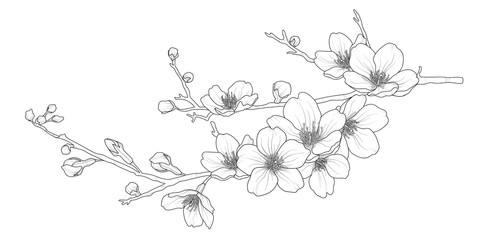 Cute hand drawn isolated sakura branch set 1.