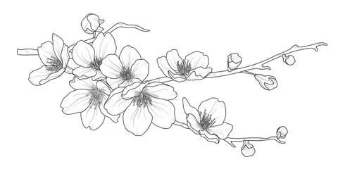 Cute hand drawn isolated sakura branch set 2.
