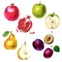 Watercolor illustration, set. Image of fruits, pomegranate, plum, apple and pear
