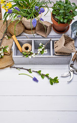 Gardening and floriculture spring flower with garden inventory