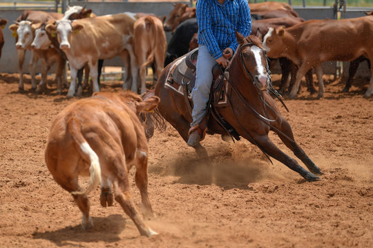 Cowboy in jeans and checkered shirt riding her horse in a calf cutting in the red clay an arena.