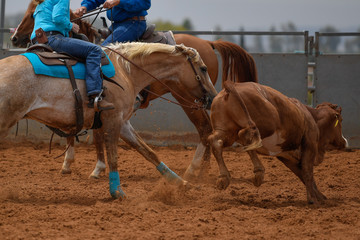 Cowboy in hat, jeans and checkered shirt riding her horse in a calf cutting competition.