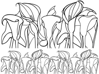 Calla, lily. Callas with leaves. Botanical illustration. Line drawing. For coloring.