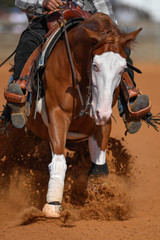 The close-up front view of a rider in cowboy chaps and boots on a horseback stopping the horse in the dust.