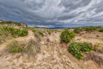 Wall Mural - Dune vegetation Voidokilia beach
