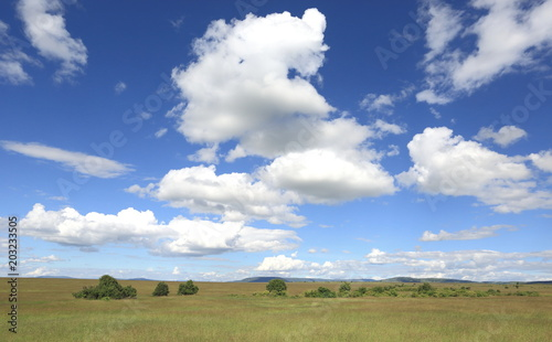 Masai Mara Wallpapers Stock Photo And Royalty Free Images On