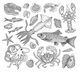 Vector seafood big collection with crab, lobster, shrimp, fish, trout, squid, seashells, octopus. Vintage engraving illustration art. Templates for design sea shops, restaurants, markets.