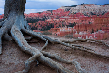 Red Rock Roots