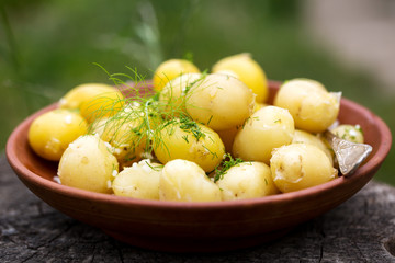 byoung potatoes with dill and garlic