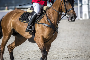 Equestrian Sports, Horse Jumping, Show Jumping event themed photo.