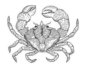 Hand drawn vintage graphic illustration with realistic crab. Marine creature. Vintage engraving illustration art. Healthy food. Templates for design sea shops, restaurants, markets.