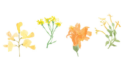 Watercolor set of Orange and yellow wild flowers