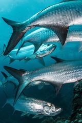 Fish swimming in sea