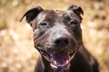 Smiling Shelter Dog