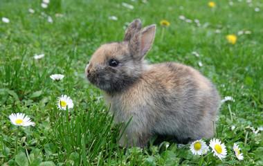 Cute little rabbit bunny in green grass meadow