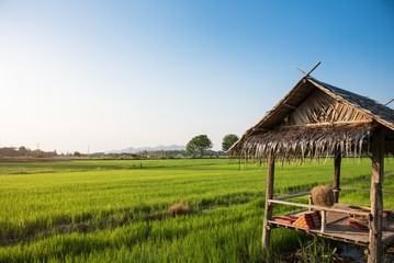 Cottage house in green rice field, Thailand.