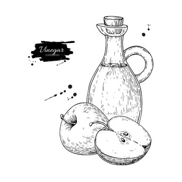 Apple vinegar vector drawing.  Hand drawn illustration. Glass bo
