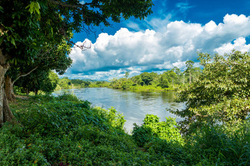 Amazon River Scene in Brazil
