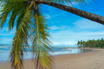 Beach of Bahia, Brazil