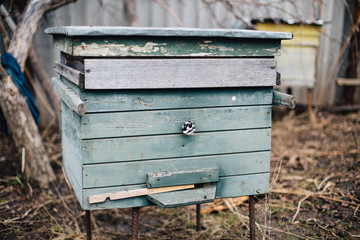 Bee hive. Old wooden green beehive with bees