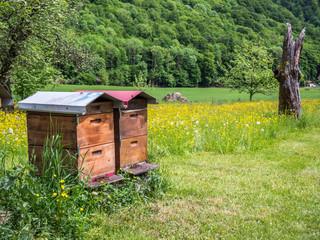 Bienenstock Holzhaus auf einer Frühlingswiese