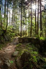 Wanderweg mit Sonnenschein durch frischen grünen Nadelwald
