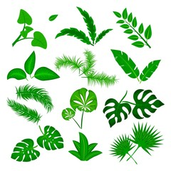 Tropical leaves vector set isolated on white background. Different green leaf collection. Jungle forest flora. Banana and exotic palm leaves in a flat cartoon style. Vector Illustration