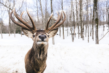 Portrait of deer standing on snow covered landscape in forest
