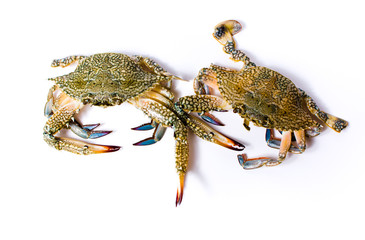 Two crabs isolated on white background.