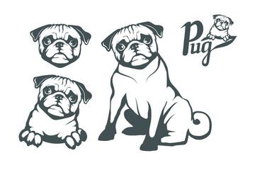 Pug dog set. Head of an pug. Pets for design. Vector graphics to design.