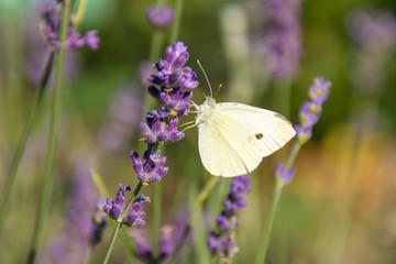 Flora, Pflanzen, Österreich, Herbst, Sommer, Natur, Gattungen