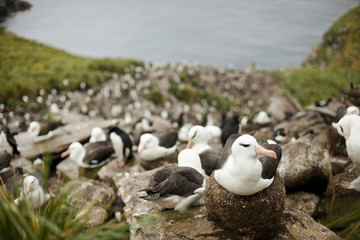 Flock of seagulls resting together on rocky coastline.