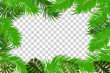 Web summer jungle frame banner. Green palm leaves template isolated transparent background. Vector abstract illustration. Realistic picture summer tropical Paradise mock up.