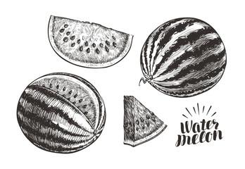 Watermelon and slices, sketch. Vintage vector illustration