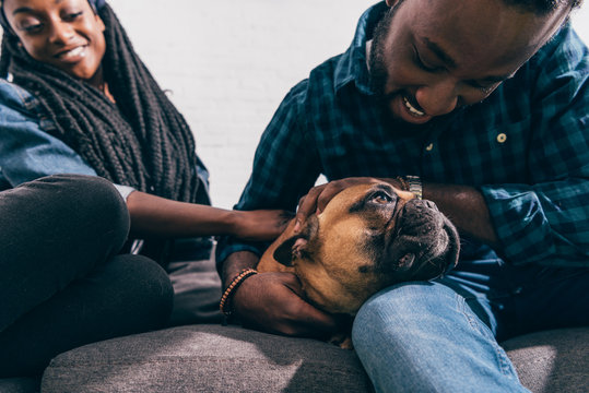 young african american couple sitting on couch and touching french bulldog