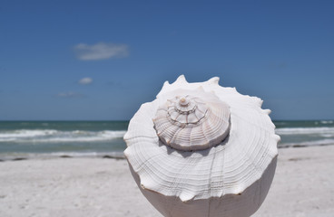 Beach with large white sea shell in foreground, blue sky, sunny day.