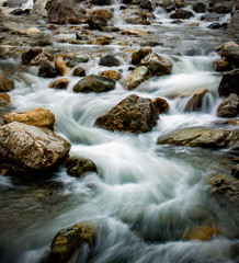 Aluminium Prints Forest river flowing river