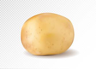 Realistic potato, 3d vector illustration