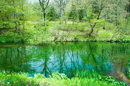 爽やかな高原の風景_新緑の高原_初夏の野原_高原の池_自然公園