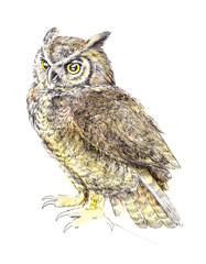 Sketch, drawing owl, watercolor