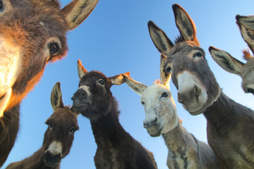 Foto op Canvas Ezel Group of funny donkeys