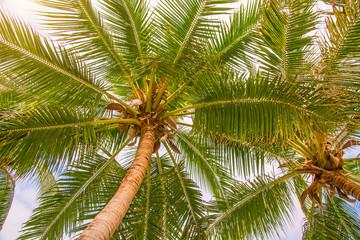 high, beautiful palm trees, clear sky, the sand, the warm tropics.