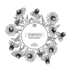 Hand drawn wild hay flowers. Echinacea flower. Medical herb. Vintage engraved art. Round composition. Good for cosmetics, medicine, treating, aromatherapy, nursing, package design, health care.