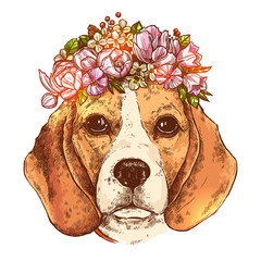 Portrait Of Beagle Dog With Flower Floral Wreath. Sketch Hand Drawn Color Style