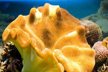 Beautiful yellow coral in a large aquarium