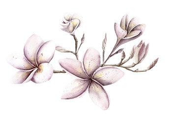 Watercolor Hand painted handpaint set of objects. Pink and purple floral flowers frangipani magnolia plumeria tree branch